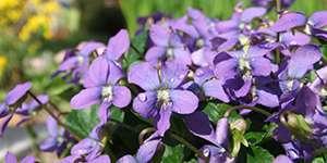 odcienie niebieskiego i fioletowego