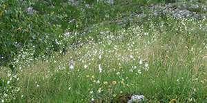 Na łąki kwietne